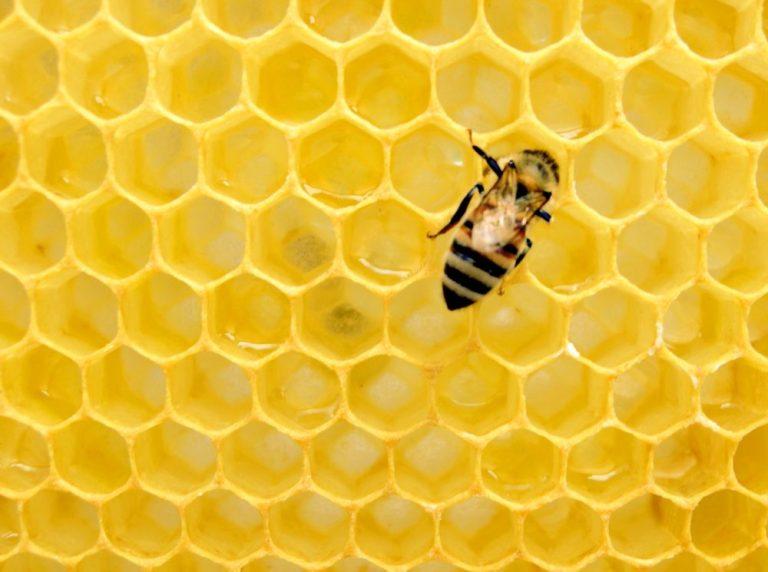 Honig ist gesund und enthält Nährstoffe