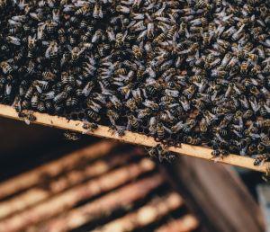 Wie bearbeitet man so einen Bienenstock