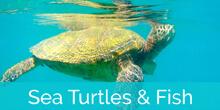 Honokeana Cove turtles and fish slideshow