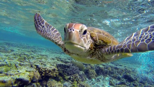 Honolulu Snorkeling Tours