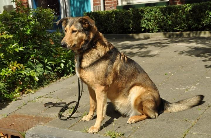 Hond_in_Tuinwijk