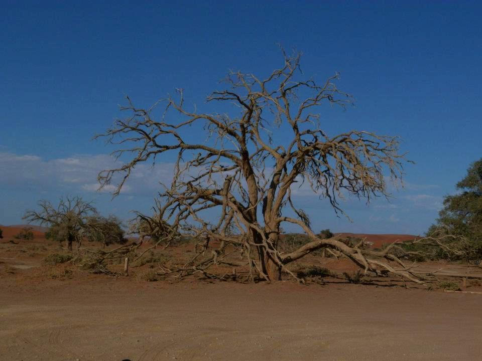 namibie-2011-www-hoogstinstravel-nl_13