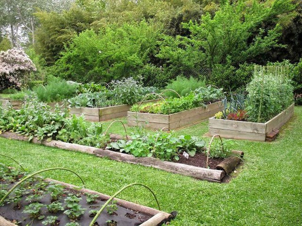 Inspiring Veggies Garden Layout For Your Outdoor Ideas 05