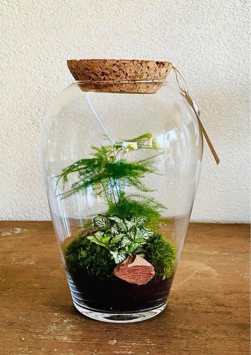 Biosféra - rastliny v skle 010