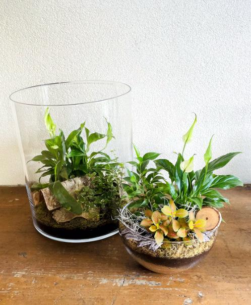 Biosféra - rastlinné terárium