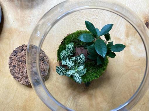 Biosféra - rastliny v skle