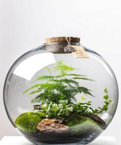 Biosféra – rastliny v skle 011