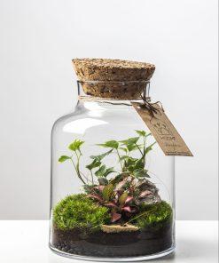 Biosféra – rastliny v skle 006