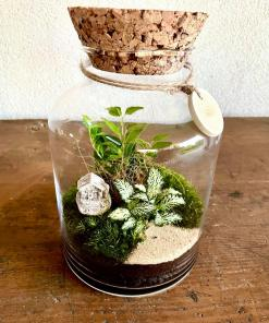 Biosféra - rastliny v skle 006