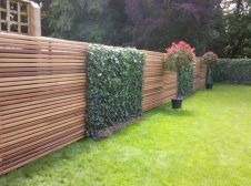 Awesome Fence With Evergreen Plants Landscaping Ideas 101