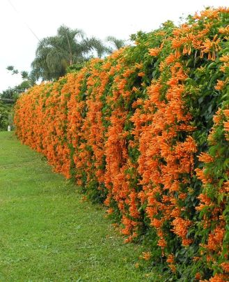 Awesome Fence With Evergreen Plants Landscaping Ideas 108