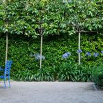 Awesome Fence With Evergreen Plants Landscaping Ideas 12