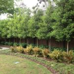 Awesome Fence With Evergreen Plants Landscaping Ideas 15