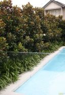 Awesome Fence With Evergreen Plants Landscaping Ideas 20