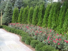 Awesome Fence With Evergreen Plants Landscaping Ideas 30