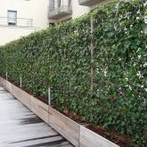 Awesome Fence With Evergreen Plants Landscaping Ideas 50