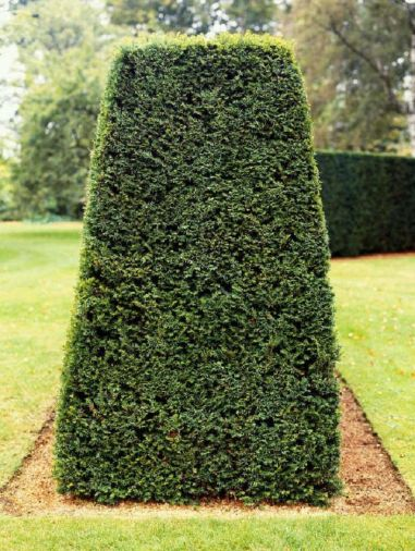 Awesome Fence With Evergreen Plants Landscaping Ideas 52