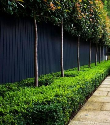 Awesome Fence With Evergreen Plants Landscaping Ideas 57