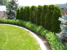 Awesome Fence With Evergreen Plants Landscaping Ideas 64