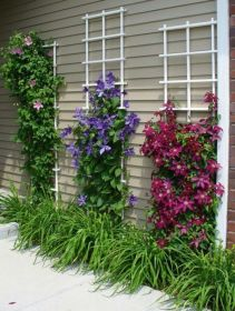 Awesome Fence With Evergreen Plants Landscaping Ideas 84
