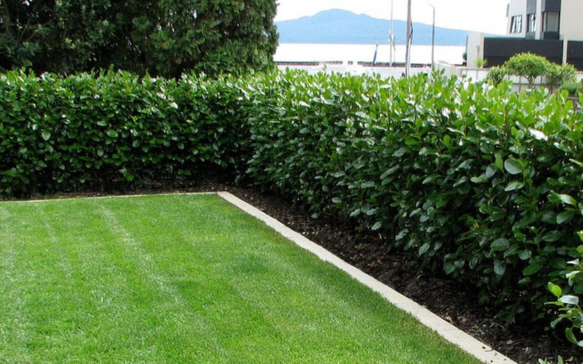 Awesome Fence With Evergreen Plants Landscaping Ideas 2