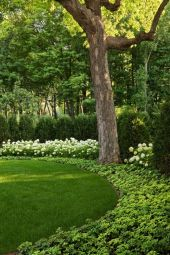 Awesome Fence With Evergreen Plants Landscaping Ideas 98