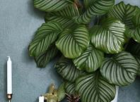 Beautiful Beautiful Home Plants for Your House ideas
