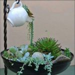 Beauty Succulents for Houseplant Indoor Decorations 18 1