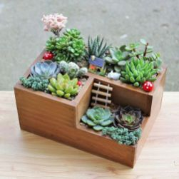 Beauty Succulents for Houseplant Indoor Decorations 20 1