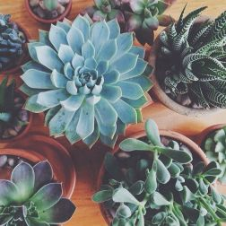 Beauty Succulents for Houseplant Indoor Decorations 21 1
