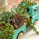 Beauty Succulents for Houseplant Indoor Decorations 35 1