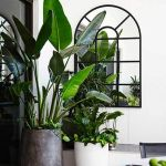 Beautiful Home Plants for Your House 8