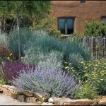 Texas Style Front Yard Landscaping Ideas 3