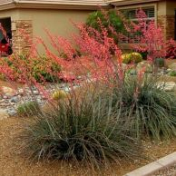 Texas Style Front Yard Landscaping Ideas 5
