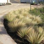 Texas Style Front Yard Landscaping Ideas 8