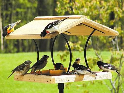Creative DIY Bird Feeder Ideas 18