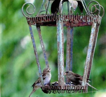 Creative DIY Bird Feeder Ideas 48