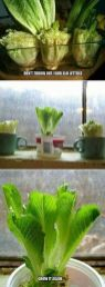 Simple DIY Vertical Garden Ideas 64