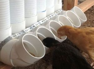 Chicken Feeder from PVC