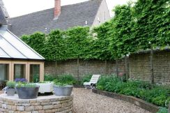 Fascinating Evergreen Pleached Trees for Outdoor Landscaping 12