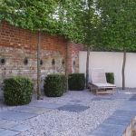Fascinating Evergreen Pleached Trees for Outdoor Landscaping 14