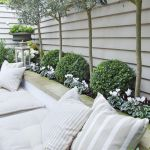 Fascinating Evergreen Pleached Trees for Outdoor Landscaping 17
