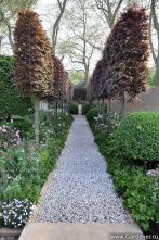 Fascinating Evergreen Pleached Trees for Outdoor Landscaping 20