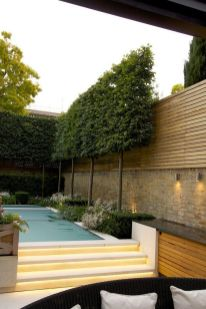 Fascinating Evergreen Pleached Trees for Outdoor Landscaping 21