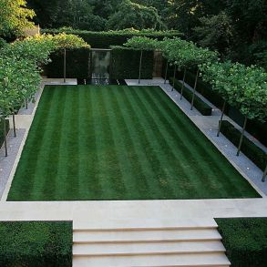 Fascinating Evergreen Pleached Trees for Outdoor Landscaping 28