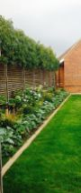 Fascinating Evergreen Pleached Trees for Outdoor Landscaping 38