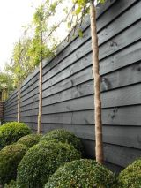 Fascinating Evergreen Pleached Trees for Outdoor Landscaping 39