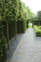 Fascinating Evergreen Pleached Trees for Outdoor Landscaping 4