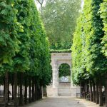 Fascinating Evergreen Pleached Trees for Outdoor Landscaping 41