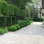 Fascinating Evergreen Pleached Trees for Outdoor Landscaping 57